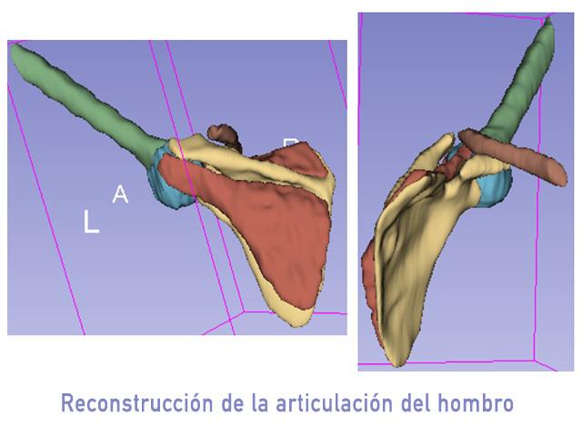 ibiomech